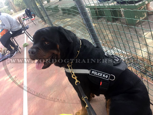 Reflective dog harness for Rottweiler