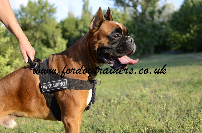 Boxer Harness Nylon Uk Non Pull Dog Harness For Boxer