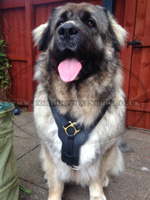 Big Dog Harness Padded