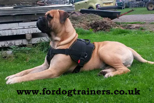 Large Nylon Dog Harness with Handle