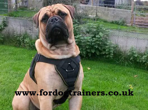 Big Dog Nylon Harness