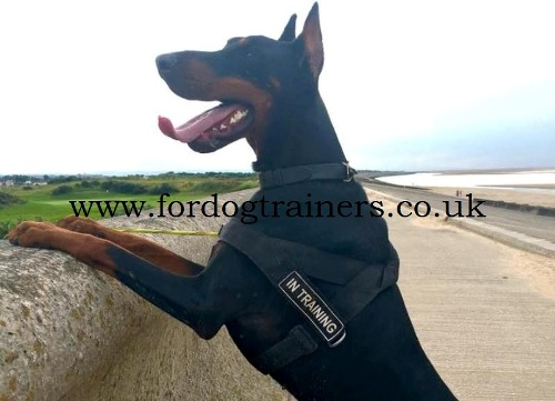 Best Harness To Stop Dog Pulling Uk