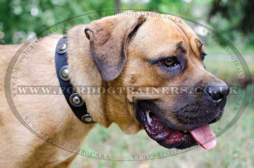 XL Designer Dog Collars for Big Dogs