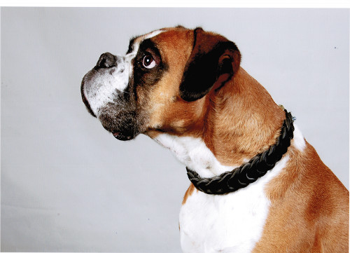dog choke collar