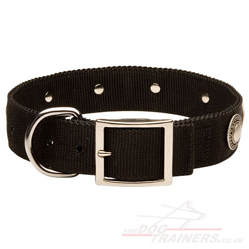 Designer Nylon Dog Collars