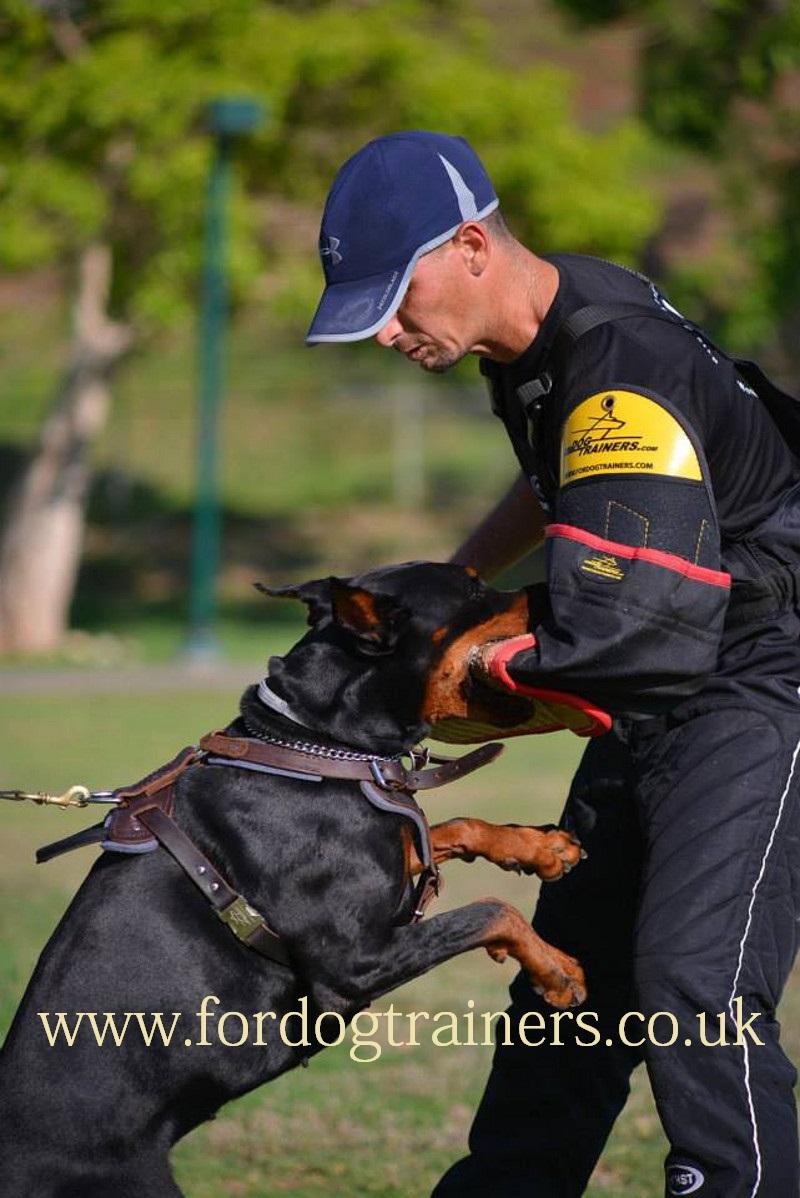 Padded Leather Dog Harness K9 Dog Training Harness 163 52 91
