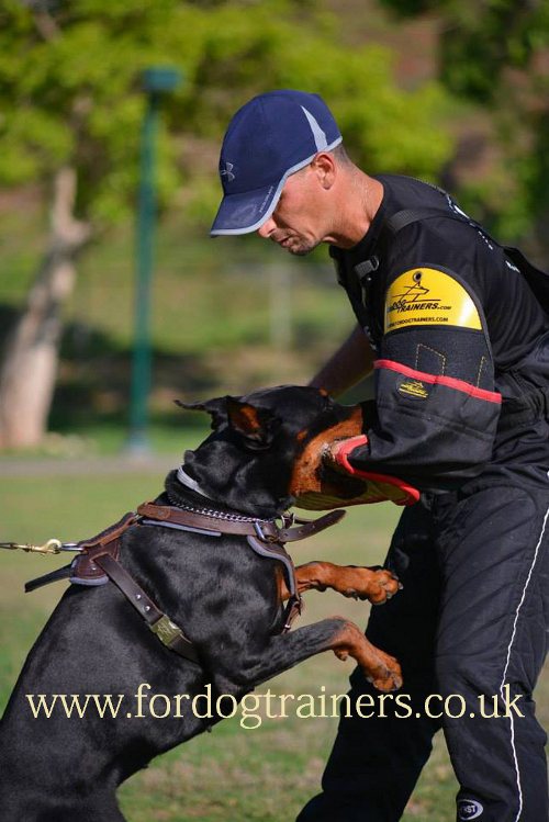 The Best Dog Training Harness for Doberman