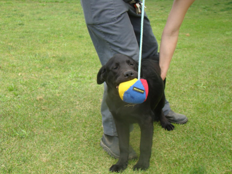 Soft Dog Ball On A Rope