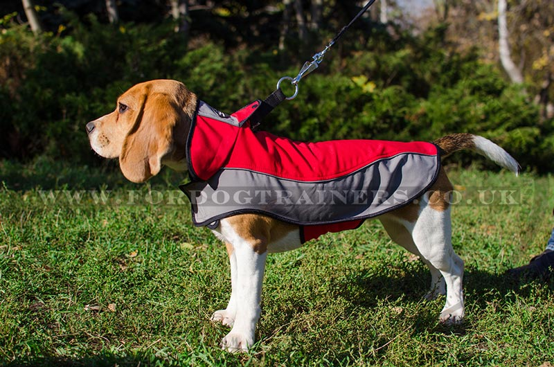 Dog Coats That Can Be Worn With A Harness