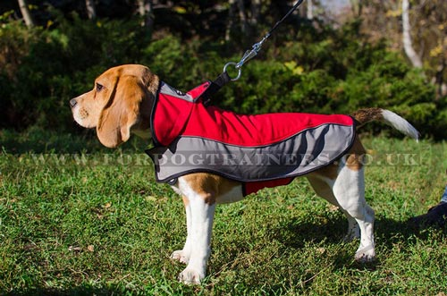 warm and waterproof dog coat