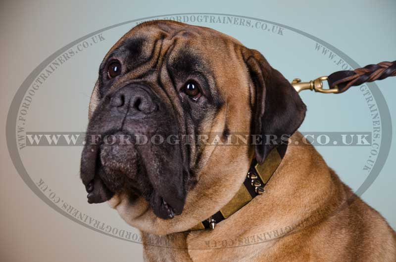 best dog collar for large dog
