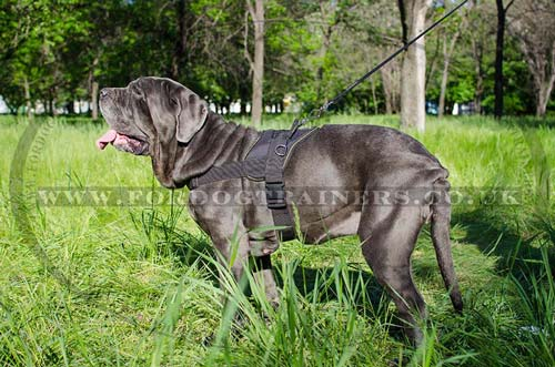 Dog Walking Harness for Neapolitan Mastiff