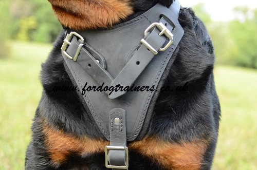 Rottweiler harness for attack/agitation training