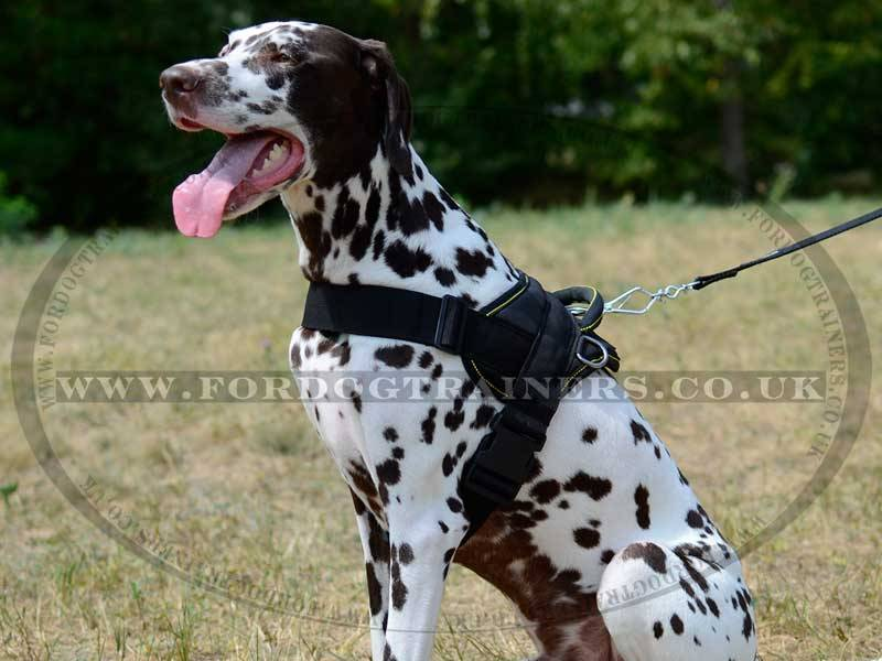 Running Dog Harness For Strong Dogs