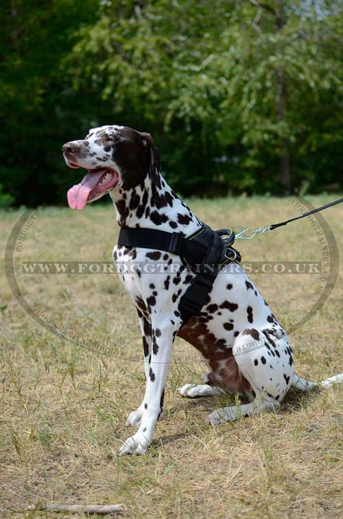 Nylon dog harness for Dalmatian