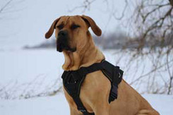heavy duty nylon dog harness