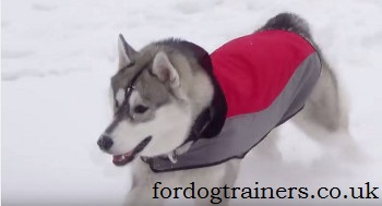 dog training in winter