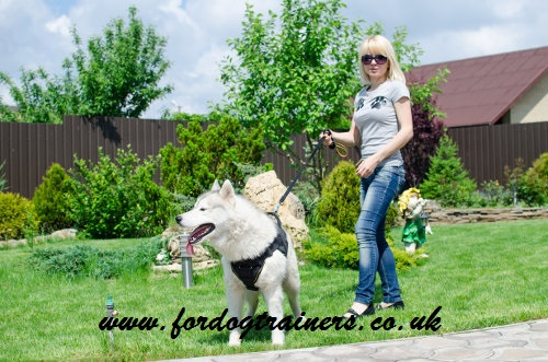 dog walking leads best choice