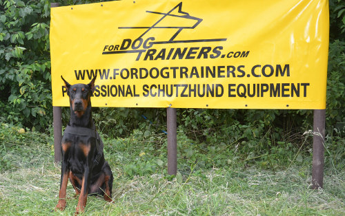 Doberman training dog harness