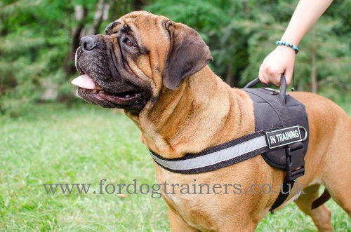 Bullmastiff Harness Nylon