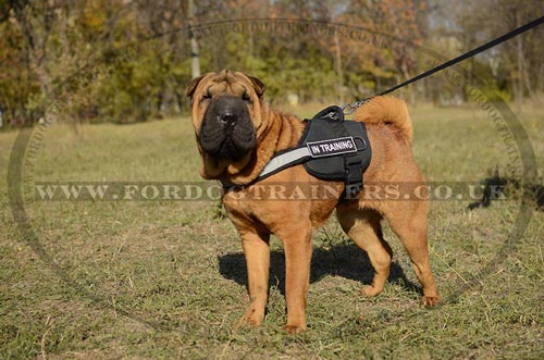 Shar Pei Dog Harness with Handle