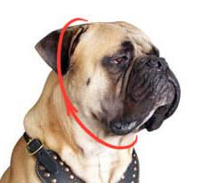 measuring dog choke collar size