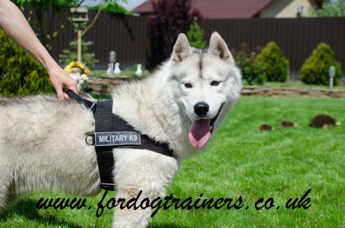 non pull dog harness uk bestseller