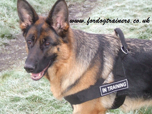 K9 Training Dog Harness for German Shepherd