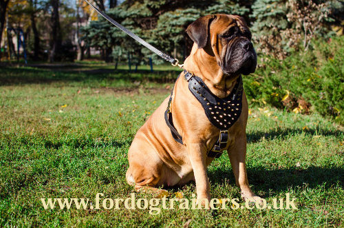 luxury padded leather dog harness
