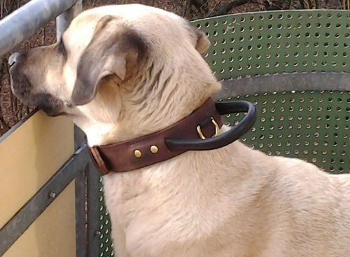 1 3/4 inch wide leather dog collar
