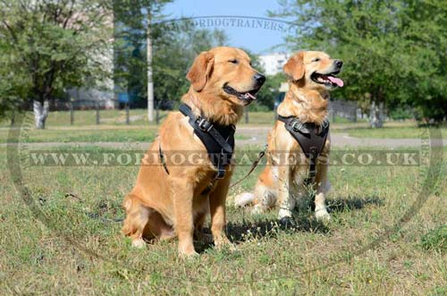 Leather dog harness for attack/agitation training