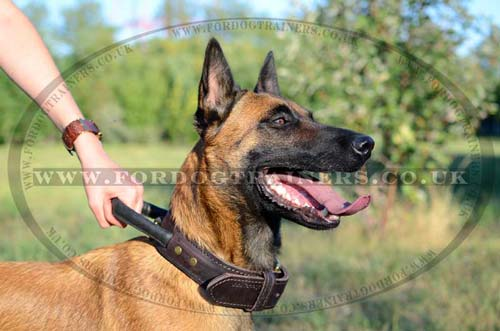 Agitation Dog Collar for Training