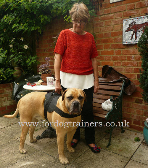 Best dog harness for mastiff