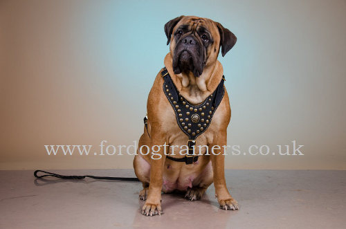 Handmade Luxury Dog Harness for Bullmastiff
