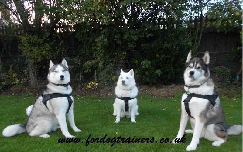 Husky Dog Harness