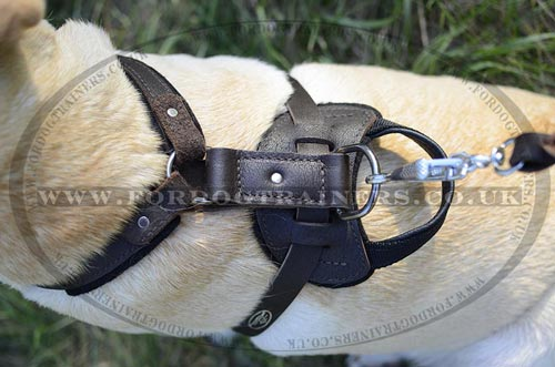 Labrador harness with handle, brown