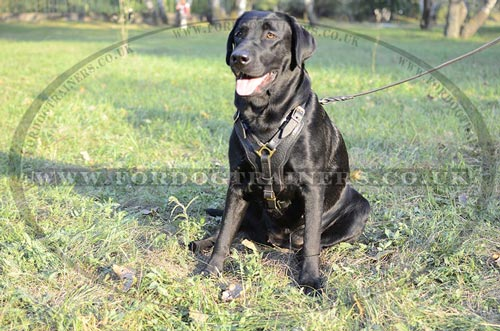 Buy Soft Padded Dog Harness for Labrador