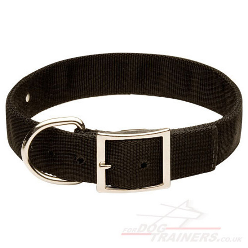 Id Plate For Dog Collar