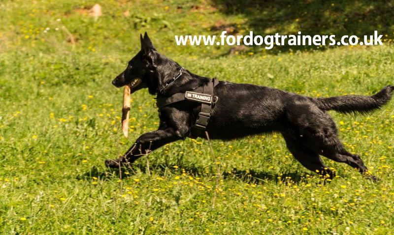 German Shepherd harness