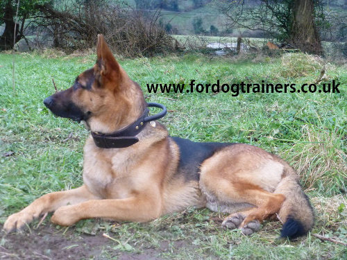 German Shepherd collar