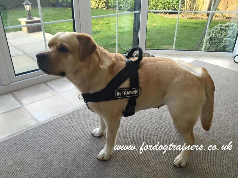 Best No Pull Training Dog Harness Uk