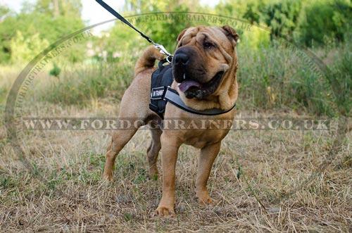 Shar Pei Dog Harness