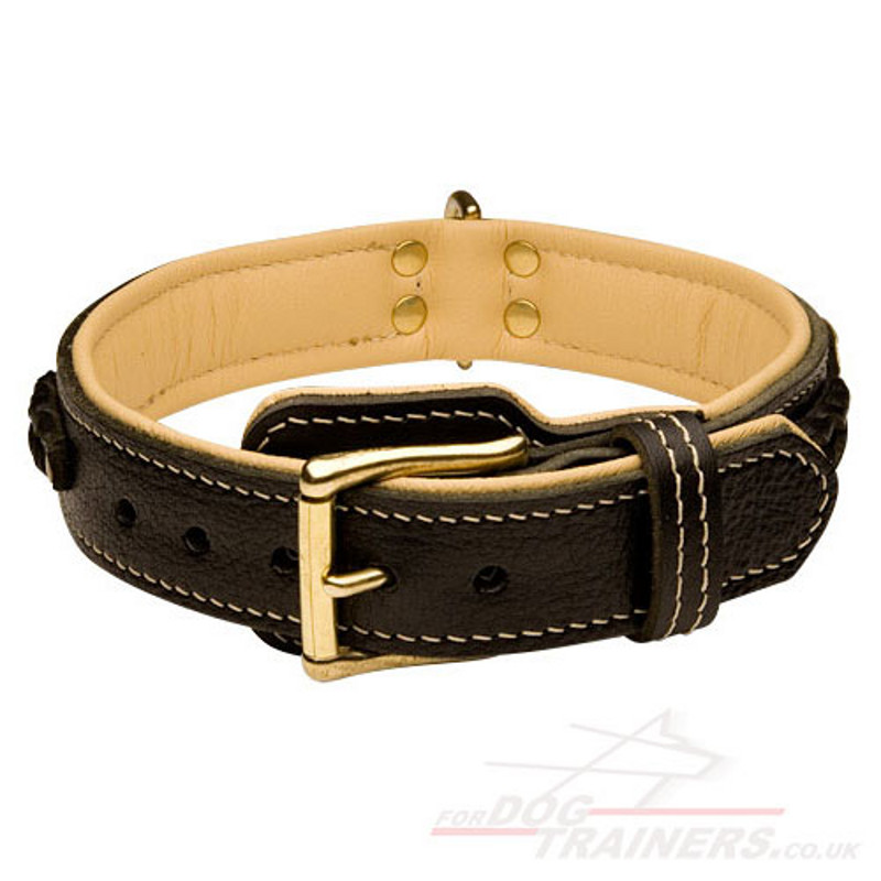 Best Dog Collars Australia