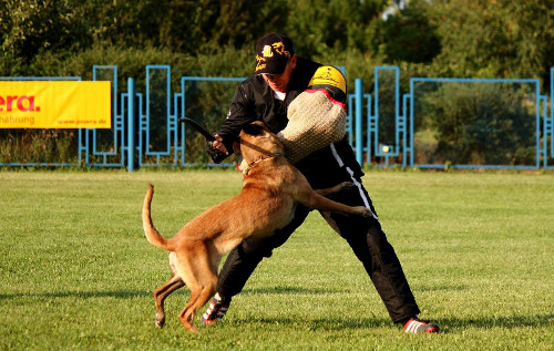 Schutzhund dog training bite sleeve choice 2013