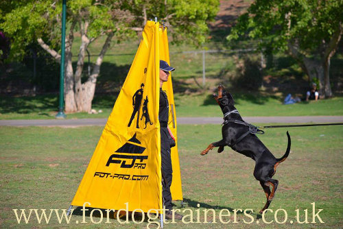 The Best K9 Dog Harness for Protection Training