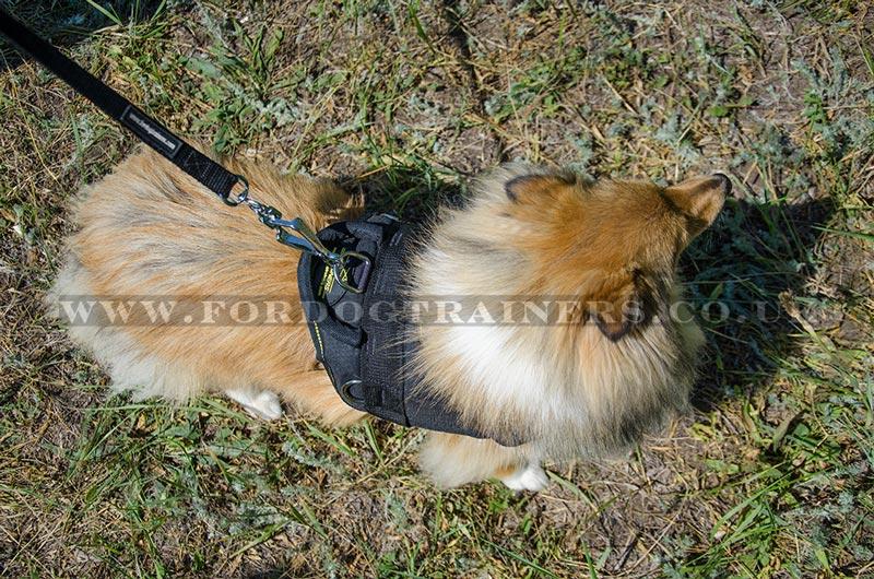 Shetland Sheepdog Harness | Small Dog Harness with Handle ☆