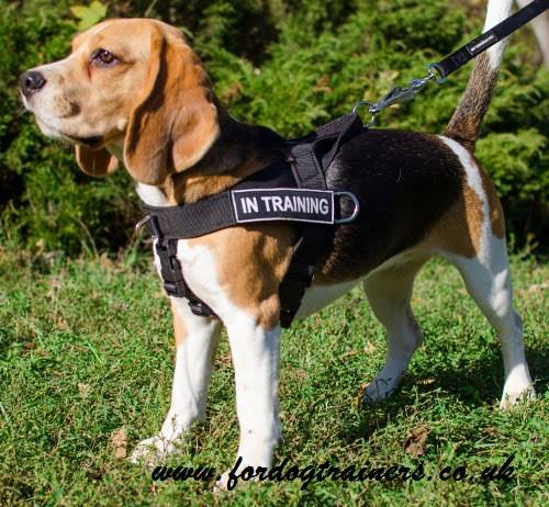 Best Non Pull Harness For Dogs Uk