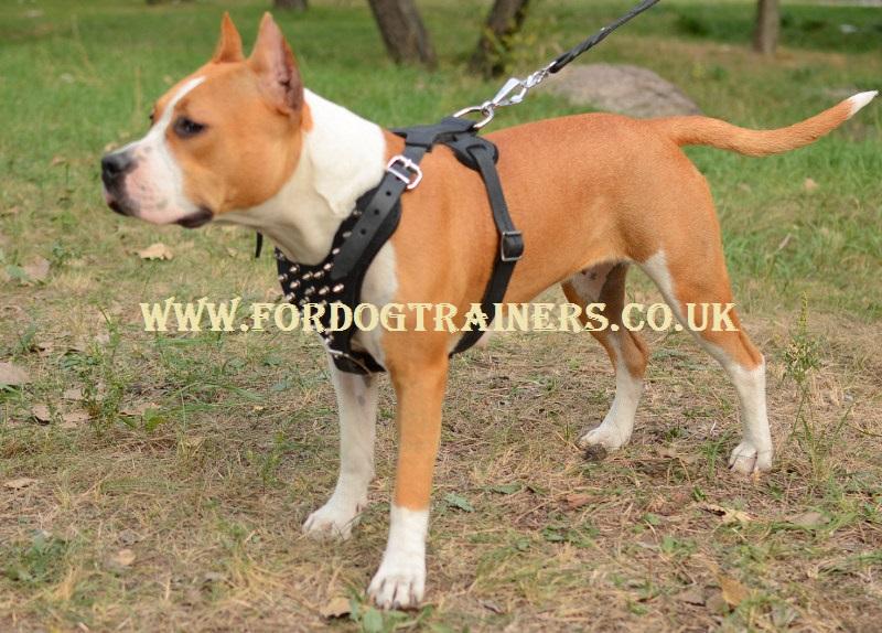 Best Staffordshire Bull Terrier harness
