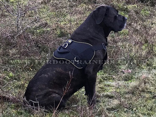 strong dog harness for Great Dane