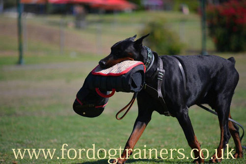 Padded leather dog harness for protection training